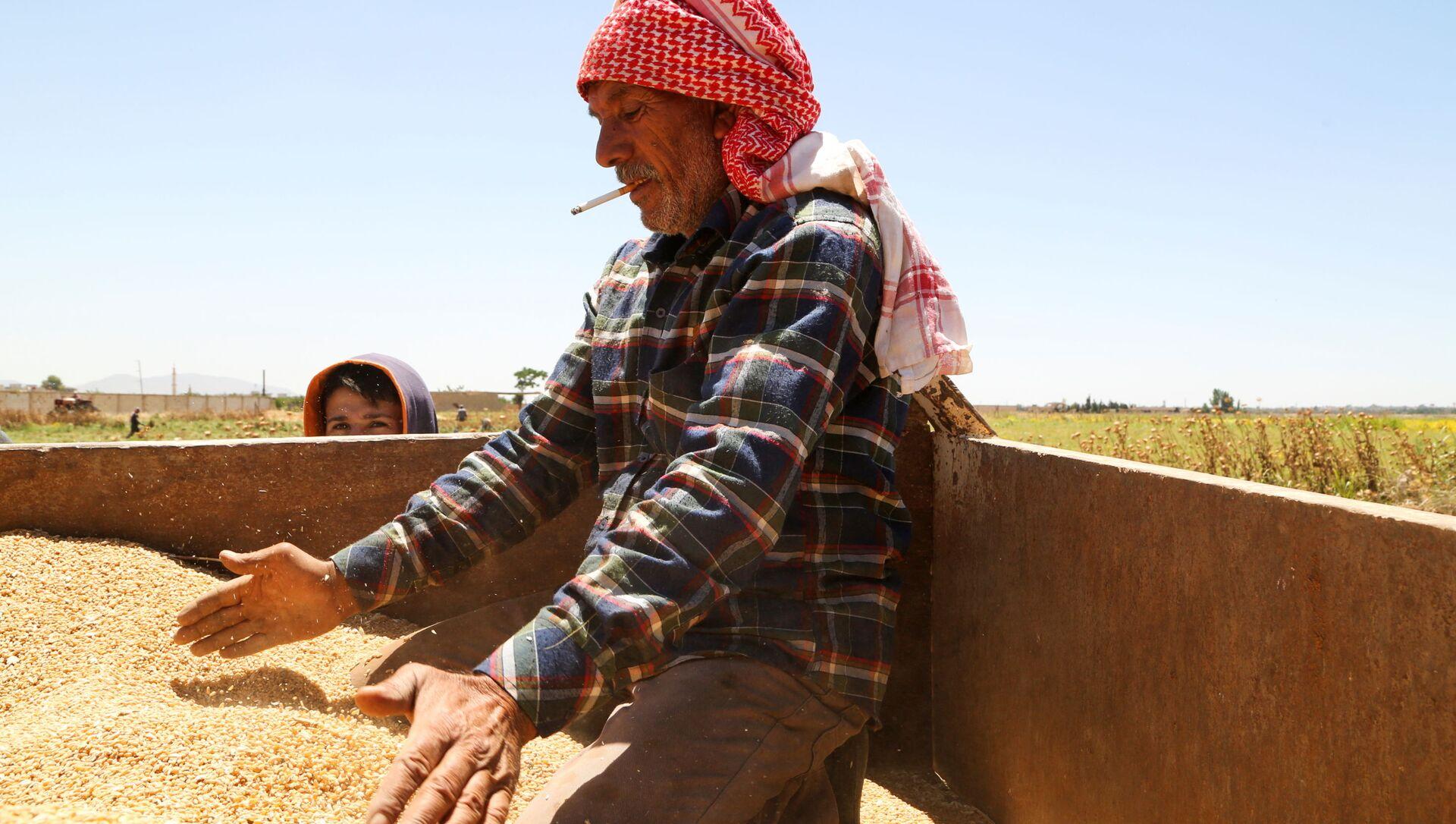 Suriye başkenti Şam'ın dışındaki Deyr Habiyeh'de buğday hasadını kontrol eden çiftçi (17 Haziran 2021) - Sputnik Türkiye, 1920, 04.07.2021
