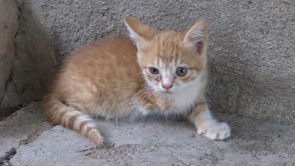 Engelli yavru kedi - Sputnik Türkiye