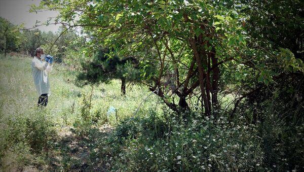 Bursa'da ormanlık alanda bebek cesedi bulundu - Sputnik Türkiye