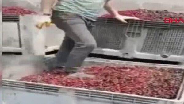 Meyve suyu yapılacak vişnelerin ayakkabıyla çiğnendiği görüntülere para cezası - Sputnik Türkiye