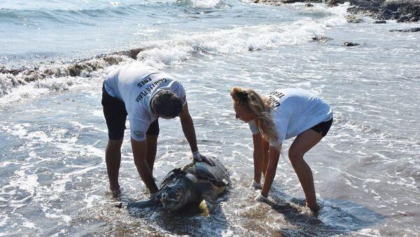 Kıyıya vuran deniz kaplumbağası - Sputnik Türkiye