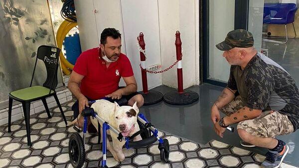 Şırnak'ta ayakları kesilen köpek için hayvanseverler seferber oldu  - Sputnik Türkiye