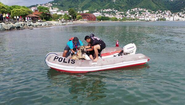 Triatlon yarışmasında denize atlayan köpek - Sputnik Türkiye