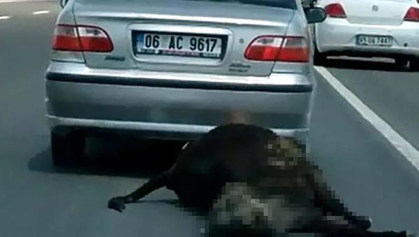 Ölü ineği otomobilinin arkasına bağlayarak sürükleyen sürücüye para cezası - Sputnik Türkiye