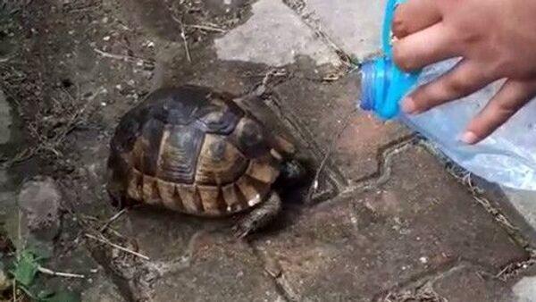Ölmek üzere olan kaplumbağaya can suyu - Sputnik Türkiye