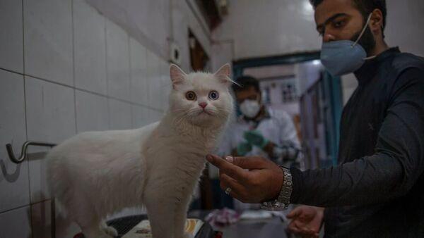 Veteriner kedi - Sputnik Türkiye