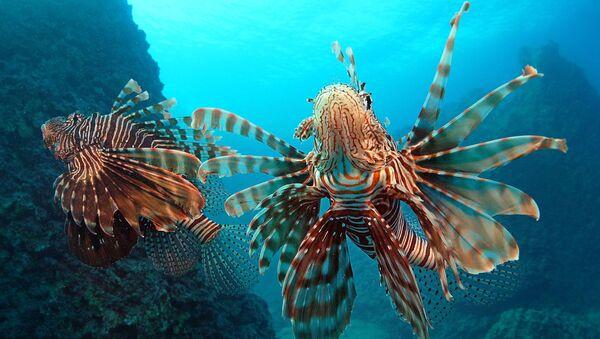 Kızıldeniz'den Akdeniz'e göçen balık türleri - Sputnik Türkiye