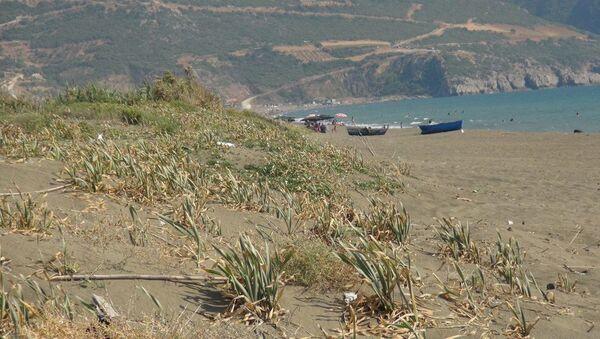 Yaz aylarının gelmesiyle denizlere akın edenleri uyaran Antakya Doğa Sanat ve Turizm Derneği Başkanı Biyolog Dr. Samim Kayıkçı, kum zambağının korumak gerektiğini söyledi. - Sputnik Türkiye