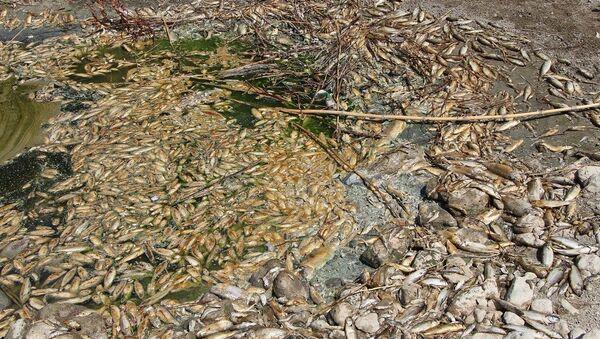 Su seviyesinin azaldığı Asi Nehri'nde çok sayıda balık öldü  - Sputnik Türkiye