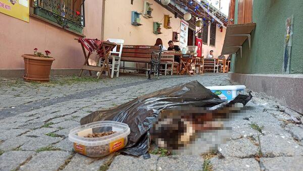 Eskişehir'in Tarihi Odunpazarı Evlerinin bulunduğu bölgede iddiaya göre bir sokak kedisi öldürülerek mama ve su kabının yanına atıldı. - Sputnik Türkiye