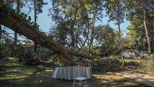 Kır düğününde 1 kişi üzerine ağaç devrilmesi sonucu öldü - Sputnik Türkiye