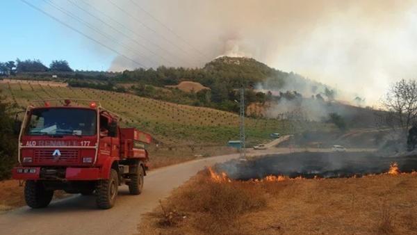 Osmaniye orman yangını - Sputnik Türkiye