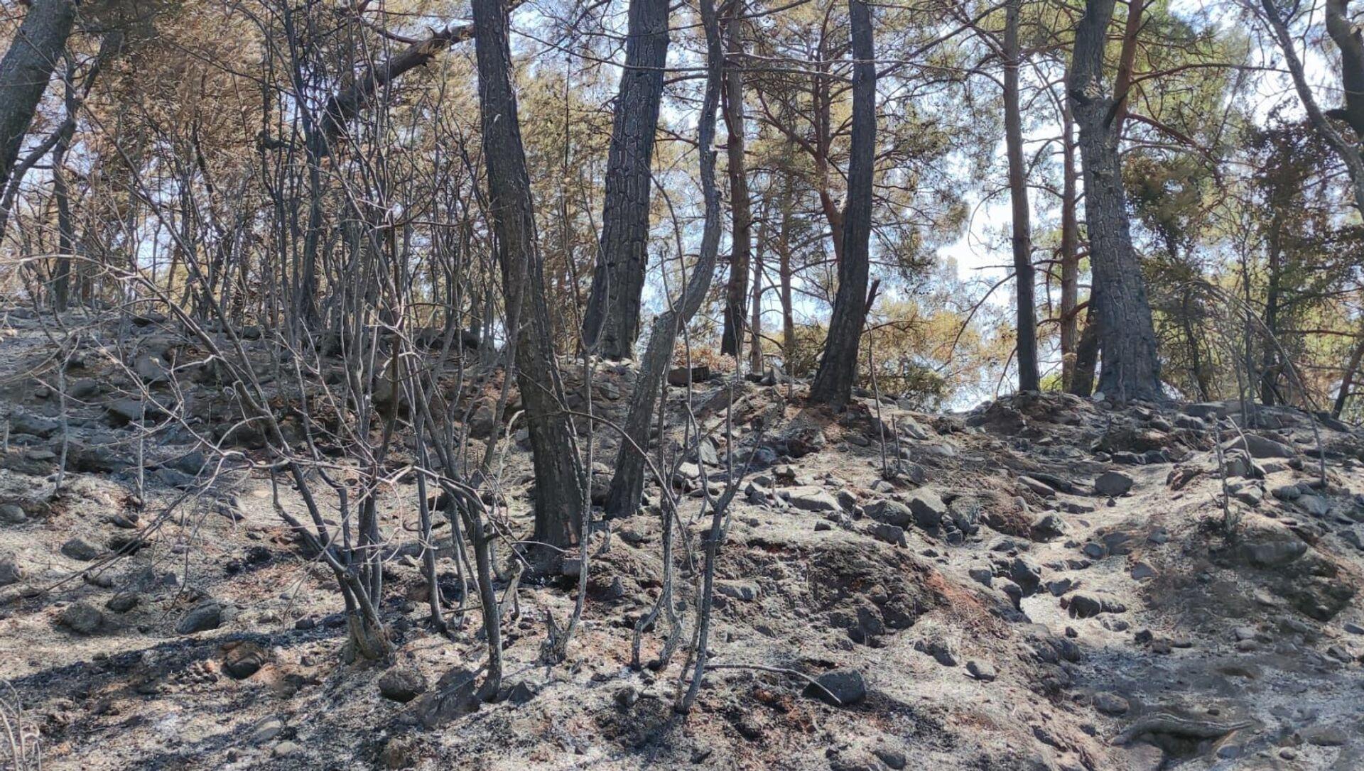 Marmaris orman yangını - Sputnik Türkiye, 1920, 30.07.2021