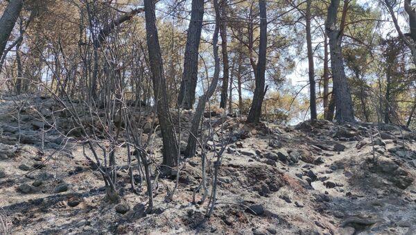 Marmaris orman yangını - Sputnik Türkiye