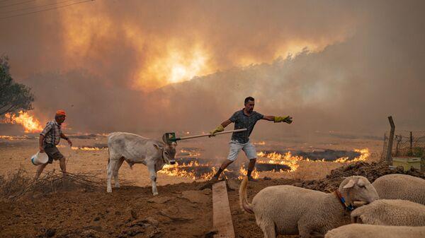Türkiye'deki orman yangınlarından etkilenen hayvanlar - Sputnik Türkiye