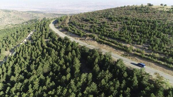 Ormanlık alan-Kırıkkale - Sputnik Türkiye