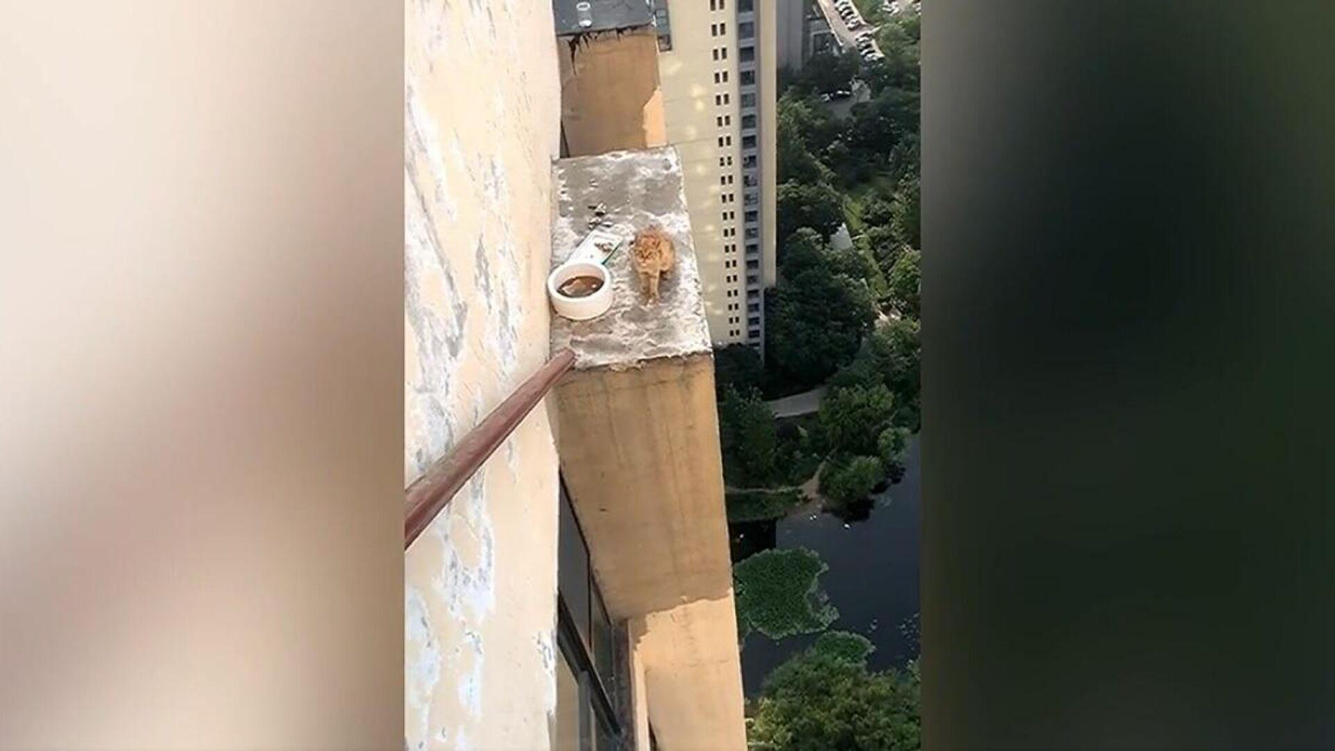 Çin'de 33. kattaki klima ünitesinin üzerinde mahsur kalan kedi kurtarıldı - Sputnik Türkiye, 1920, 23.08.2021