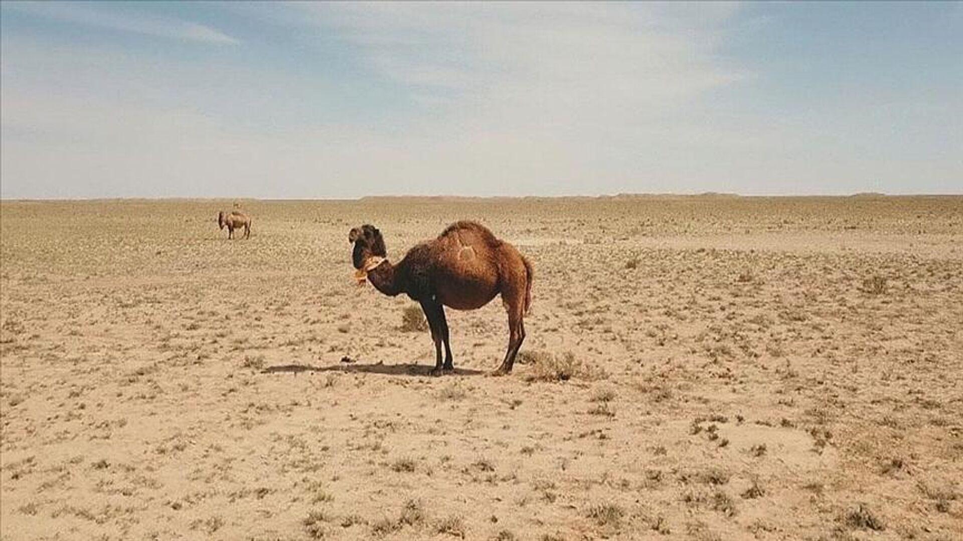 Kazakistan'da küresel ısınma nedeniyle tahıl alanları kurudu, binlerce hayvan öldü - Sputnik Türkiye, 1920, 26.08.2021