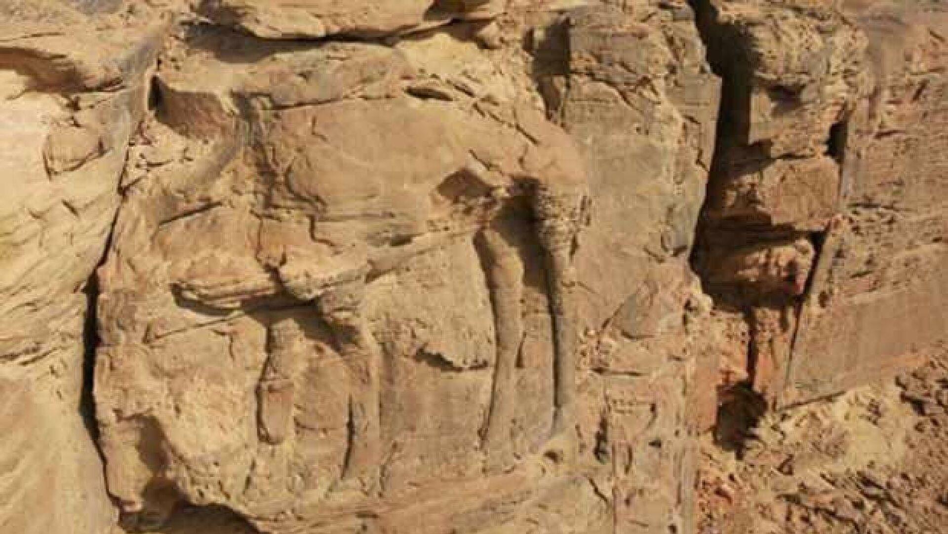Suudi Arabistan'da kayalara kazınmış deve figürleri 8 bin yıllık çıktı - Sputnik Türkiye, 1920, 16.09.2021