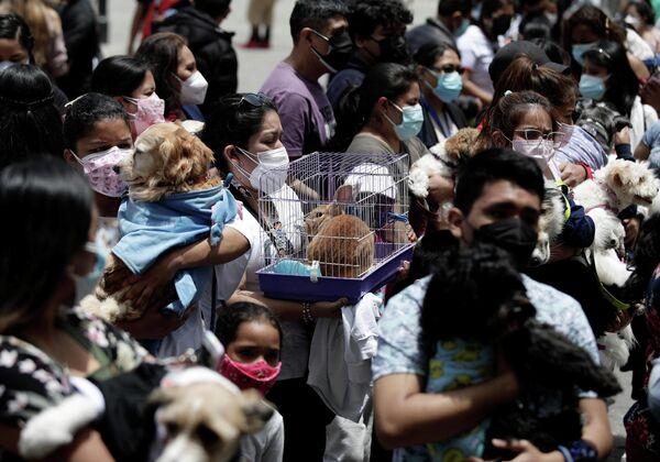Lima'daki San Francisco Manastırı'nda kediler, köpekler ve tavşanlar kutsal su ile kutsandı. REUTERS/Angela Ponce - Sputnik Türkiye
