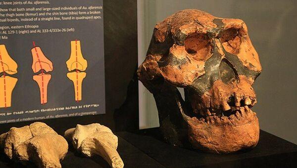 Etiyopya'da 3 milyon yıllık insansı fosil - Sputnik Türkiye