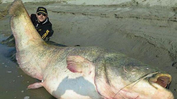 127 kiloluk yayın balığını yakaladı - Sputnik Türkiye