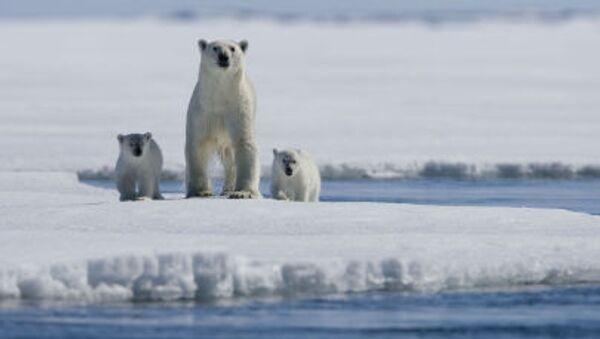 Bir kutup ayısı ailesi - Sputnik Türkiye