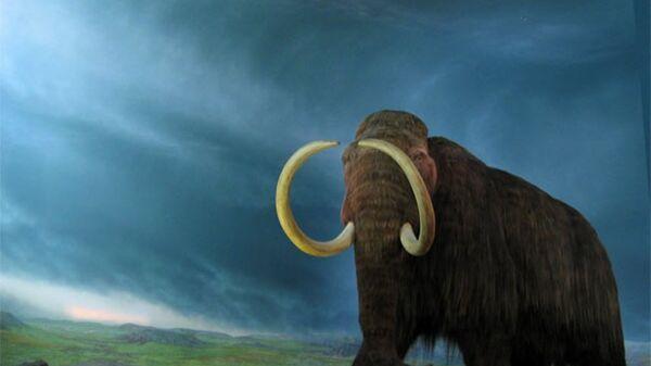 Yünlü mamutlar - Sputnik Türkiye