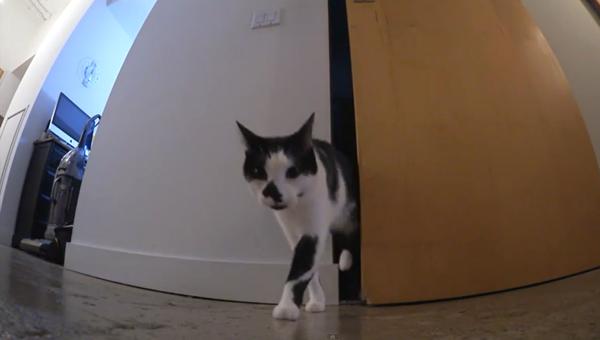 Kediler'in hayat kuralları - Sputnik Türkiye