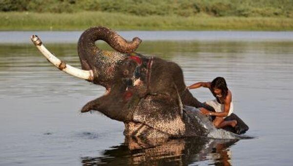 Hindistan'da bir fil sürücüsü nehirde  iş arkadaşını yıkıyor - Sputnik Türkiye