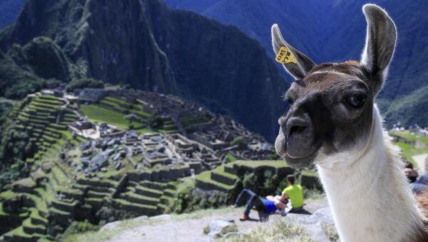 İnkaların zamana meydan okuyan eserlerini görmek ve Amazon ormanlarındaki vahşi yaşamf tanıklık etmek için dünyanın dört yanından milyonlarca turist her yıl Peru'yu ziyaret ediyor. - Sputnik Türkiye