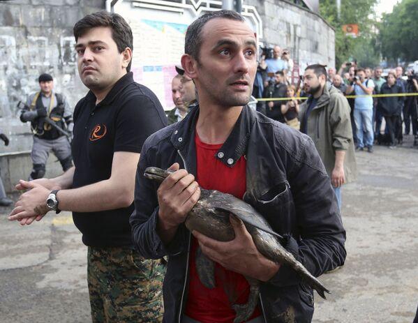 Bir vatandaş, selden etkilenen Tiflis hayvanat bahçesinden bir kuş kurtarıyor - Sputnik Türkiye