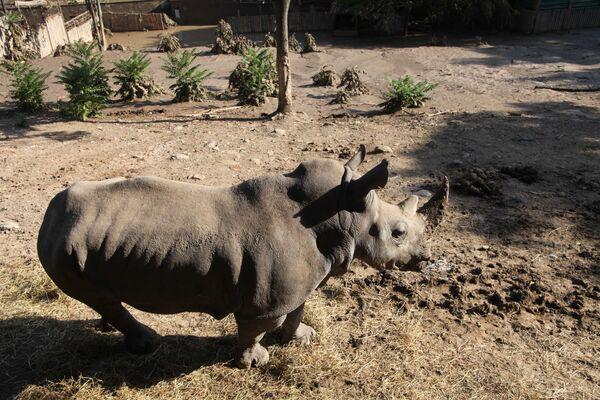 Selden etkilenen Tiflis hayvanat bahçesindeki gergedan - Sputnik Türkiye