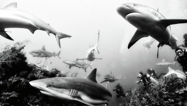 Ödüllü fotoğrafçıyla okyanusun derinliklerine doğru - Sputnik Türkiye