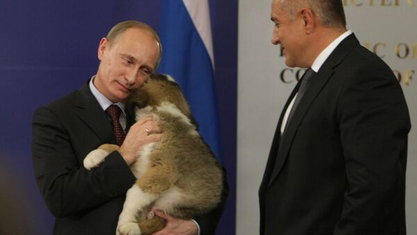 Bulgarian Prime Minister Boyko Borissov presents puppy to Russian Prime Minister Vladimir Putin - Sputnik Türkiye