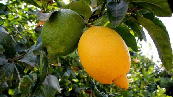 Tescilli mandalina ve limonlar - Sputnik Türkiye