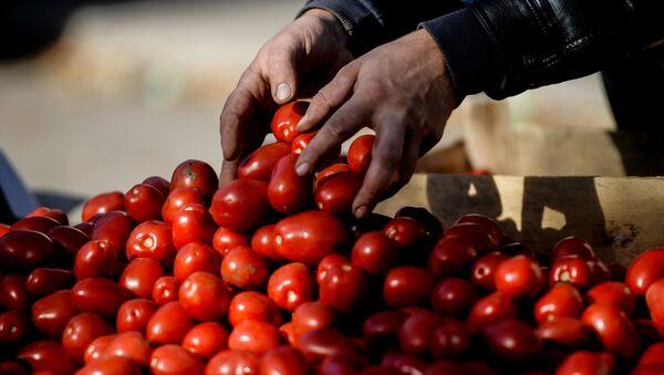 Rusya'da tarım fuarı - domates - Sputnik Türkiye
