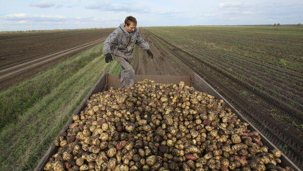 Patates - Sputnik Türkiye