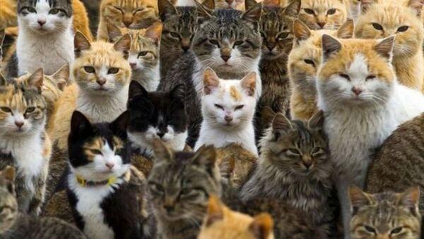 Japonya'da Kedi Günü - Sputnik Türkiye
