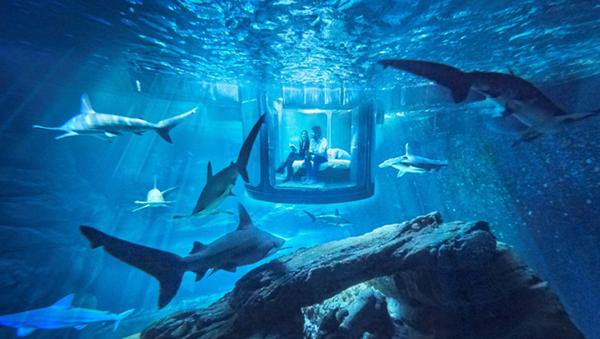 köpek balığı - Sputnik Türkiye