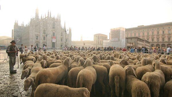 İtalya'da çobanlık yine moda - Sputnik Türkiye