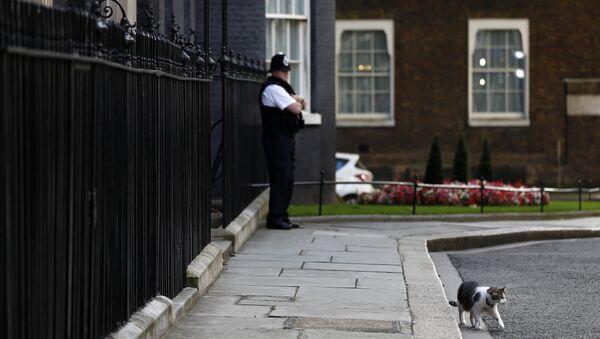 İngiltere'nin yeni başbakan adayı kedi Larry - Sputnik Türkiye