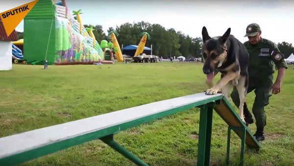 'Gerçek Dost': Uluslararası Ordu Oyunları'nda köpek yarışı heyecanı - Sputnik Türkiye