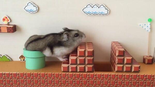 Hamster Süper Mario görev başında - Sputnik Türkiye