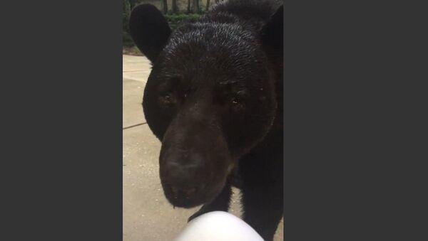 Evin bahçesinde telefonla oynayan kadını siyah ayı ziyarete geldi - Sputnik Türkiye