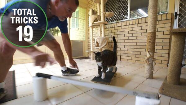 Dünyanın en 'numaracı' kedisinden 1 dakikada 20 farklı oyun - Sputnik Türkiye