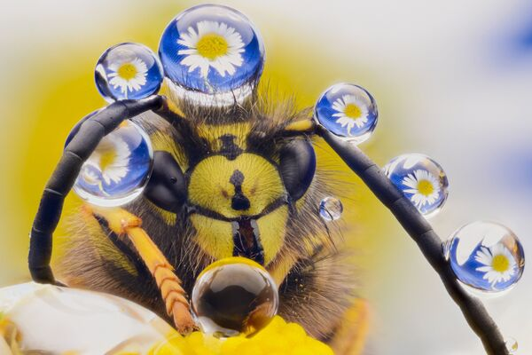 Yeni Zelanda'da süslü bir arı - Sputnik Türkiye