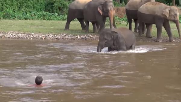 Tayland'daki Fil Doğam Yaşam Parkı'nda 5 yaşındaki Kham Lha isimli bir fil, nehirde boğulduğunu sandığı bakıcısı Darrick Thomson'ı kurtarmak için suya atladı. - Sputnik Türkiye