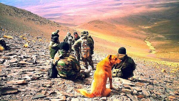 Arjantin ordusunda görevli köpek 'Çavuş Cabo' - Sputnik Türkiye