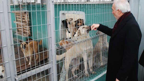 Kütahya Belediye Başkanı Kamil Saraçoğlu, Belediye Sokak Hayvanları Bakımevi ve Rehabilitasyon Merkezi'ni ziyaret etti. - Sputnik Türkiye